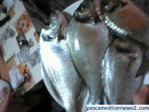 Doraicas del Mar Menor!!!