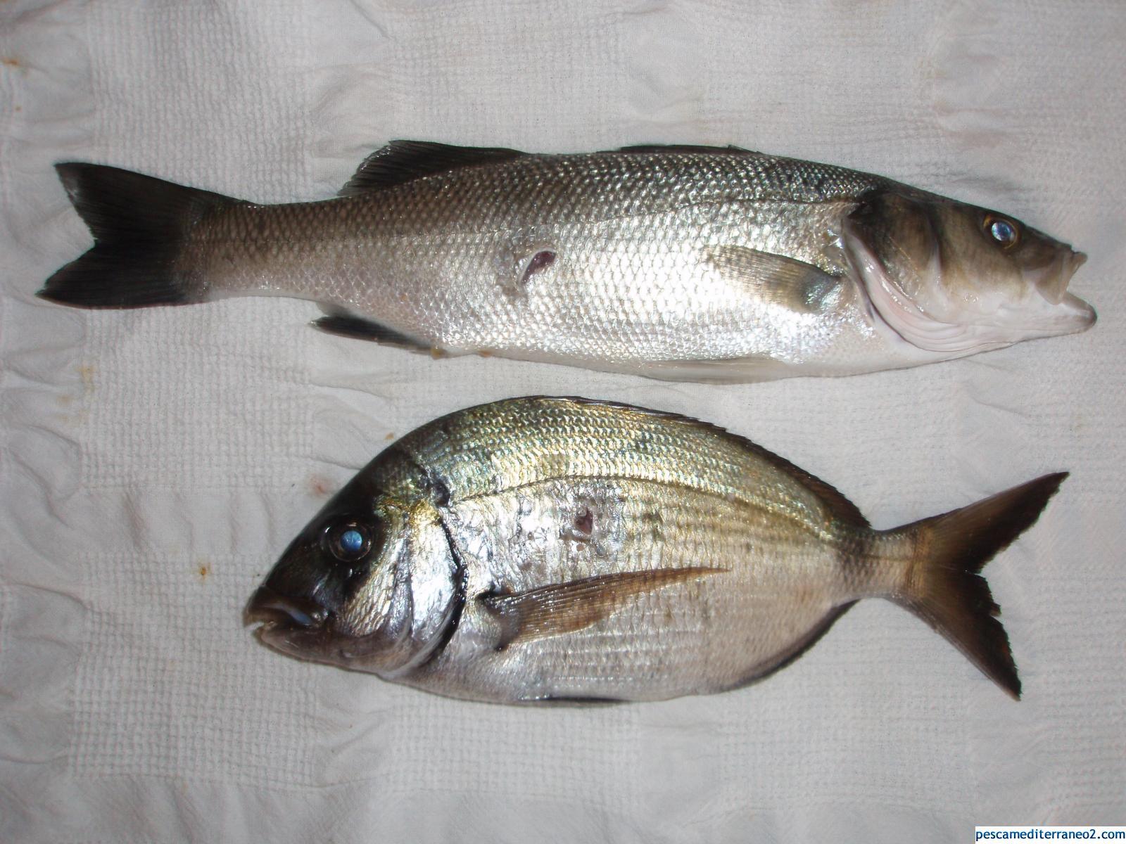 Pesca del 2010