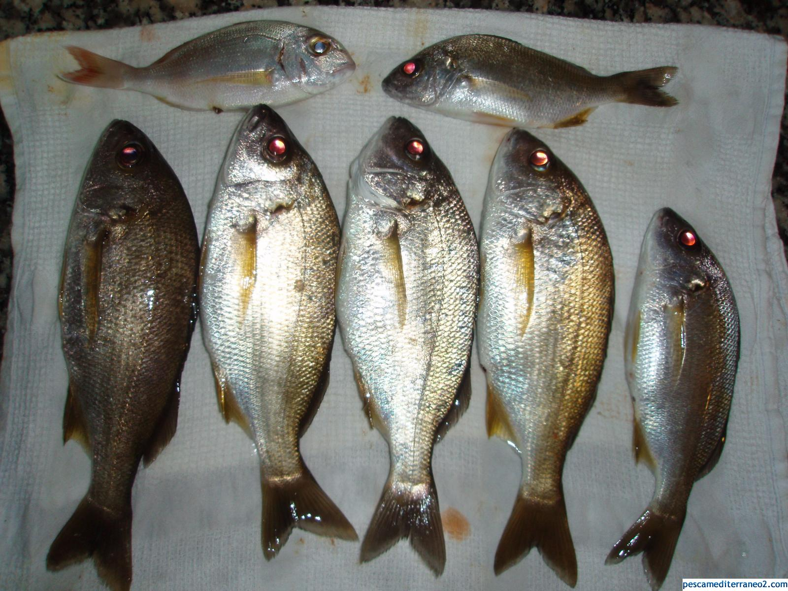 Pesca del 2011