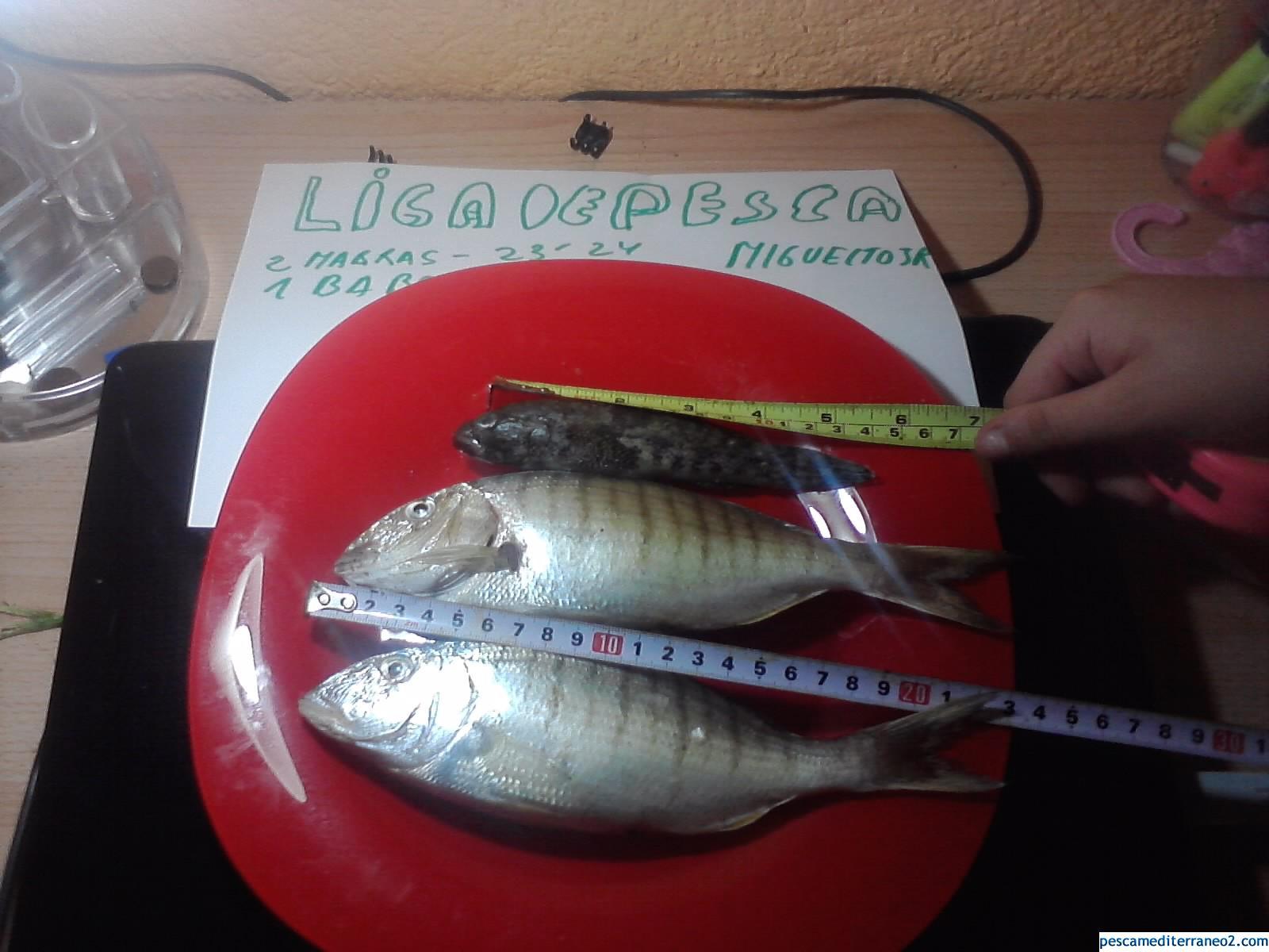 Mabras pescadas con lombriz