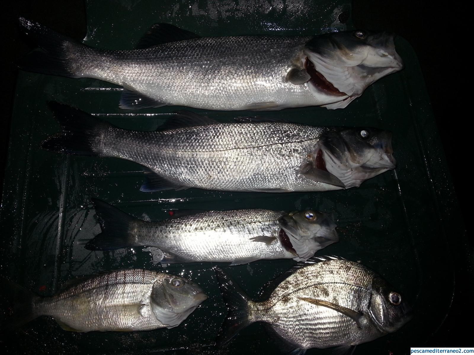 Mi primera pesquera