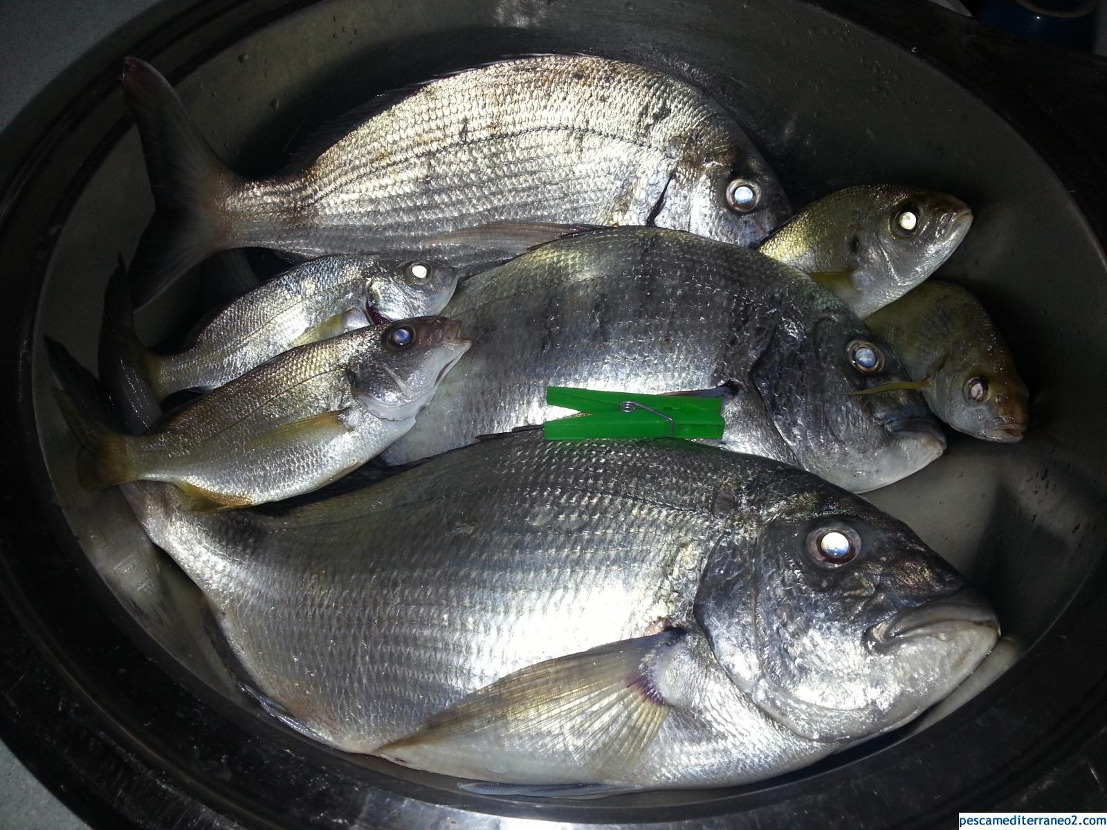 Pesca total de la gran mañana.