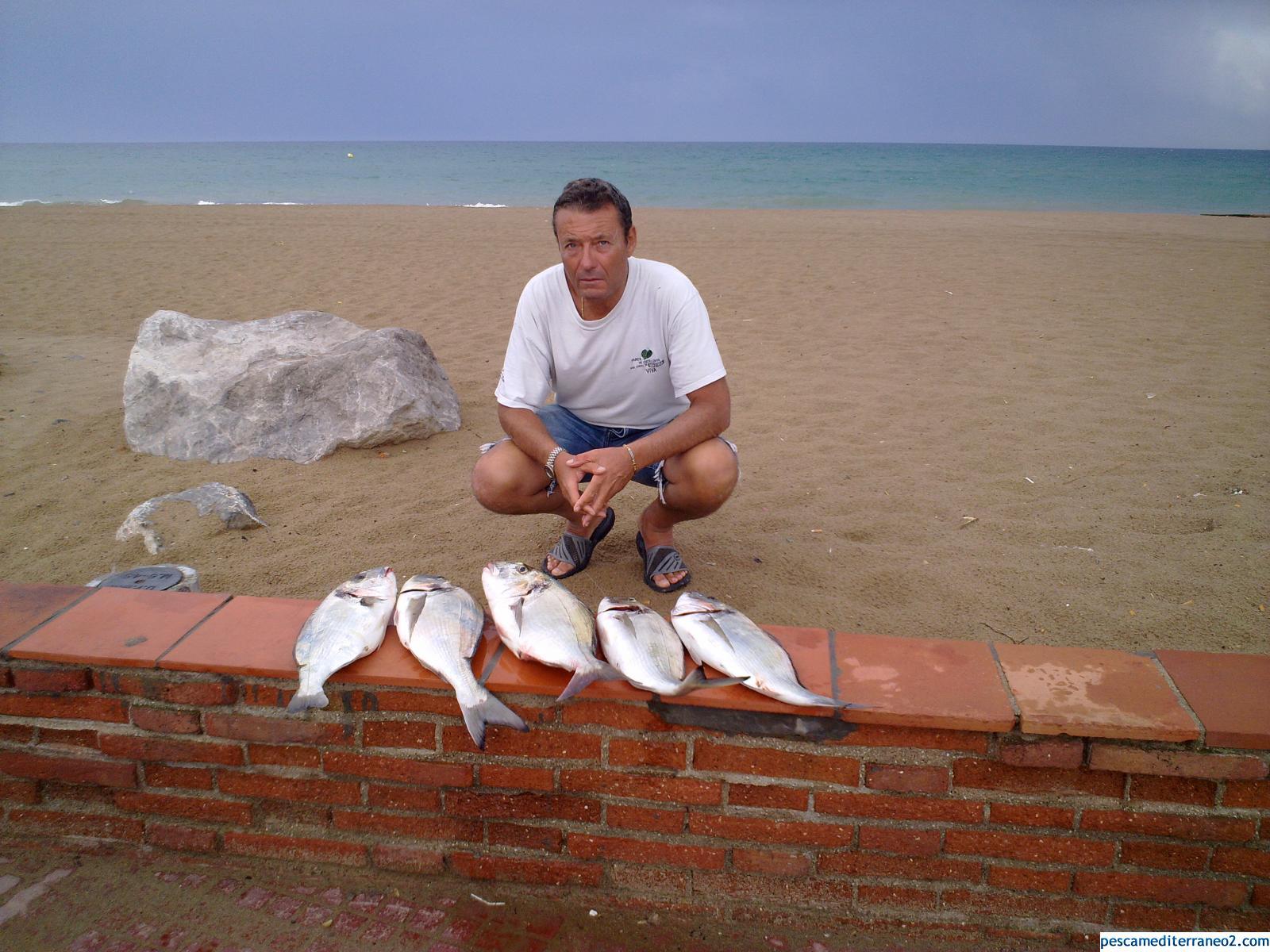 pescata de doradas
