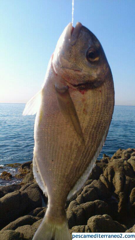 Pesca del 2012