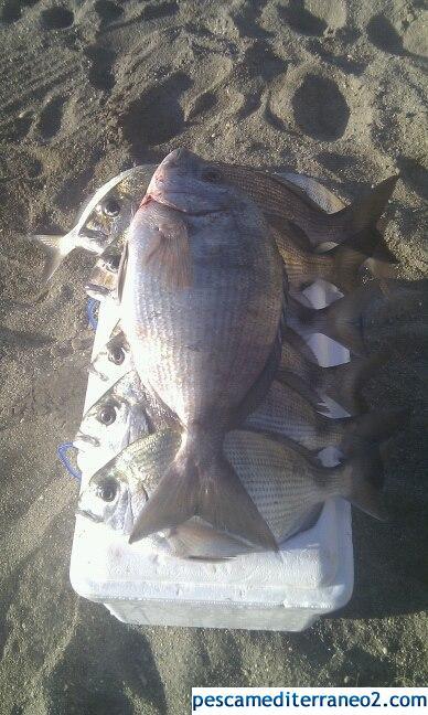 pesquera De sargos