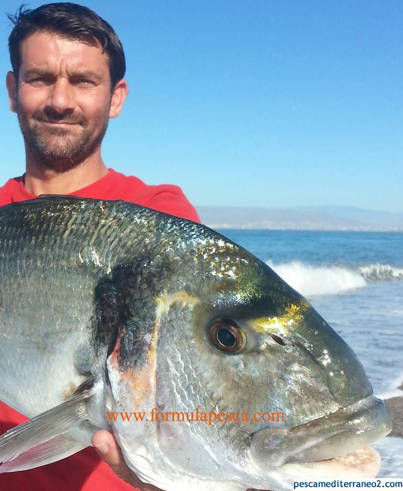 Dorada de 3 Kilos en Almería