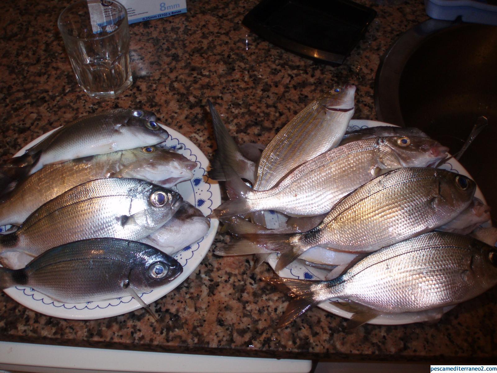 pescadas en la playa de la mata