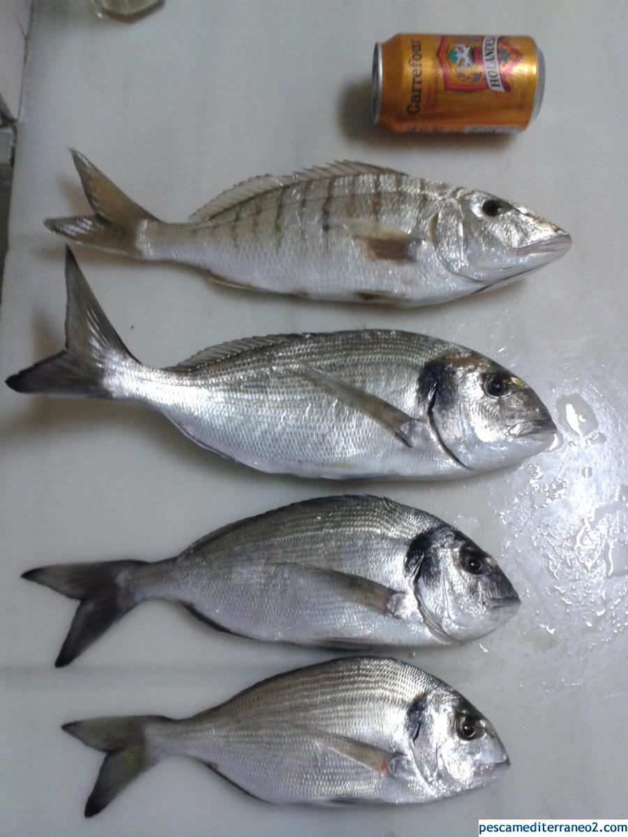 Pesca Enero finales