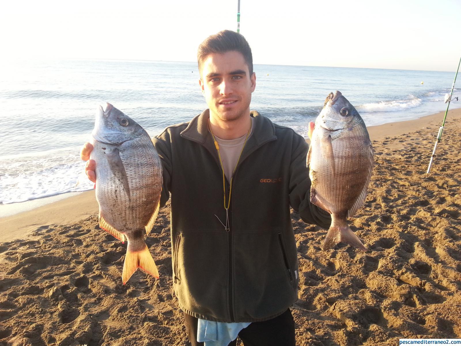Gran pesquera de sargos