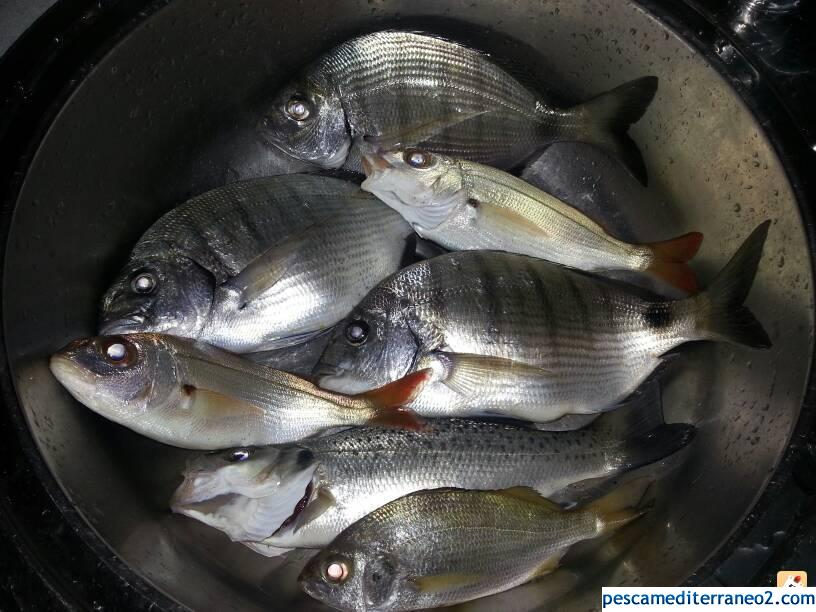 Buena pesquera