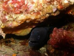 Submarinismo y apnea