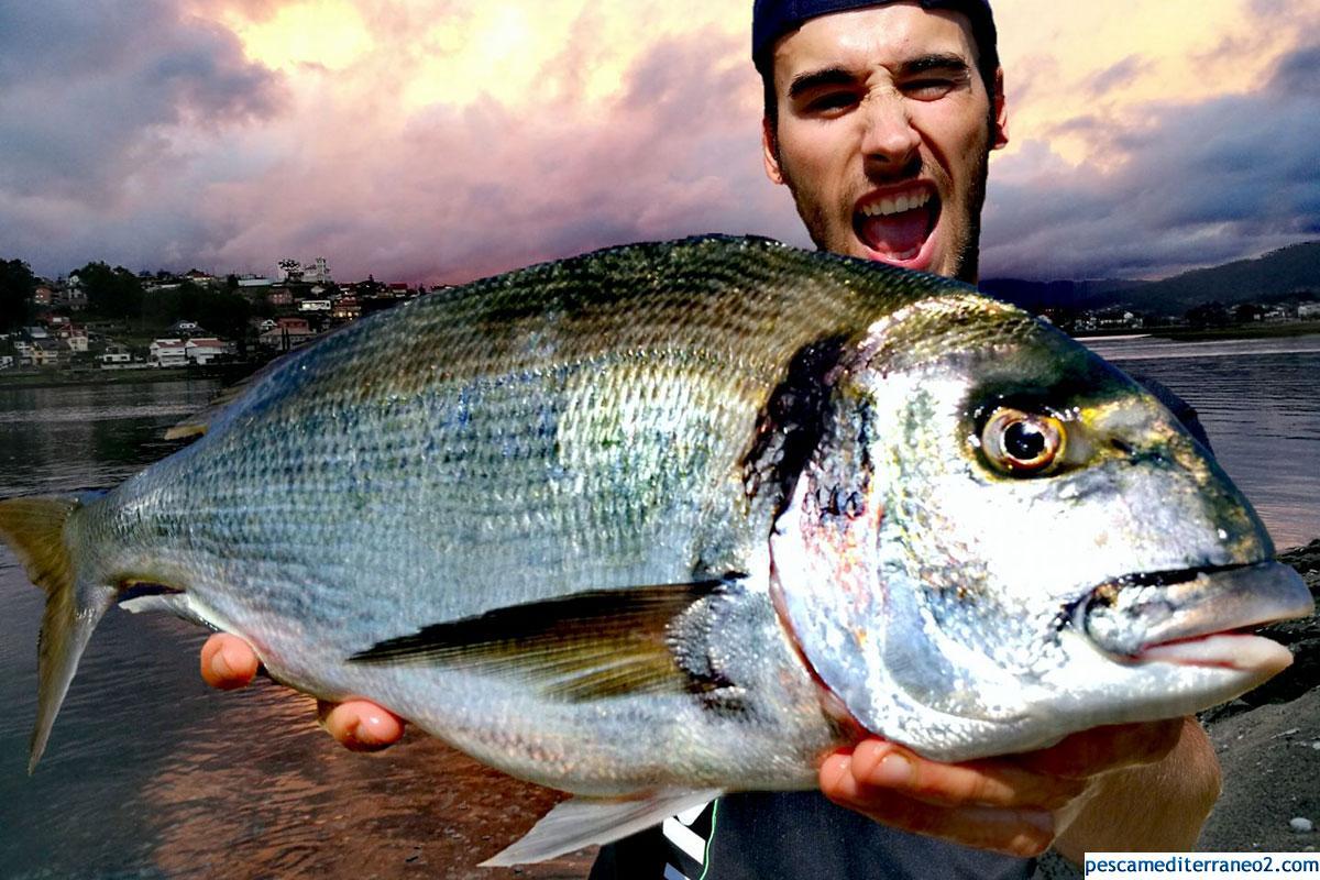 Dorada XL Pesca Surf Casting Galicia
